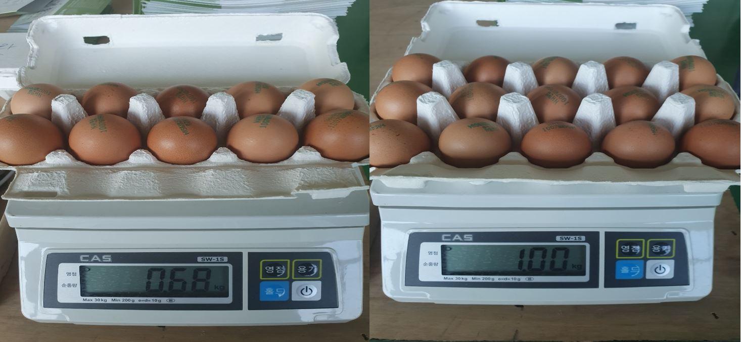 계란띠지 자동끼움기(2).JPG